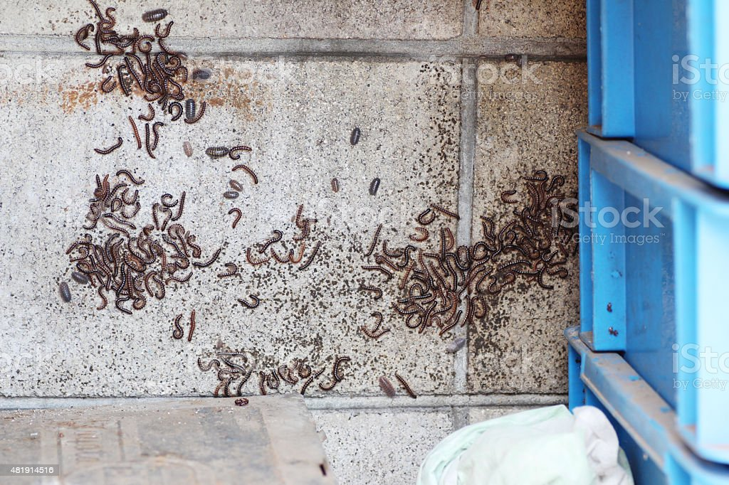 Many centipedes on the wall stock photo