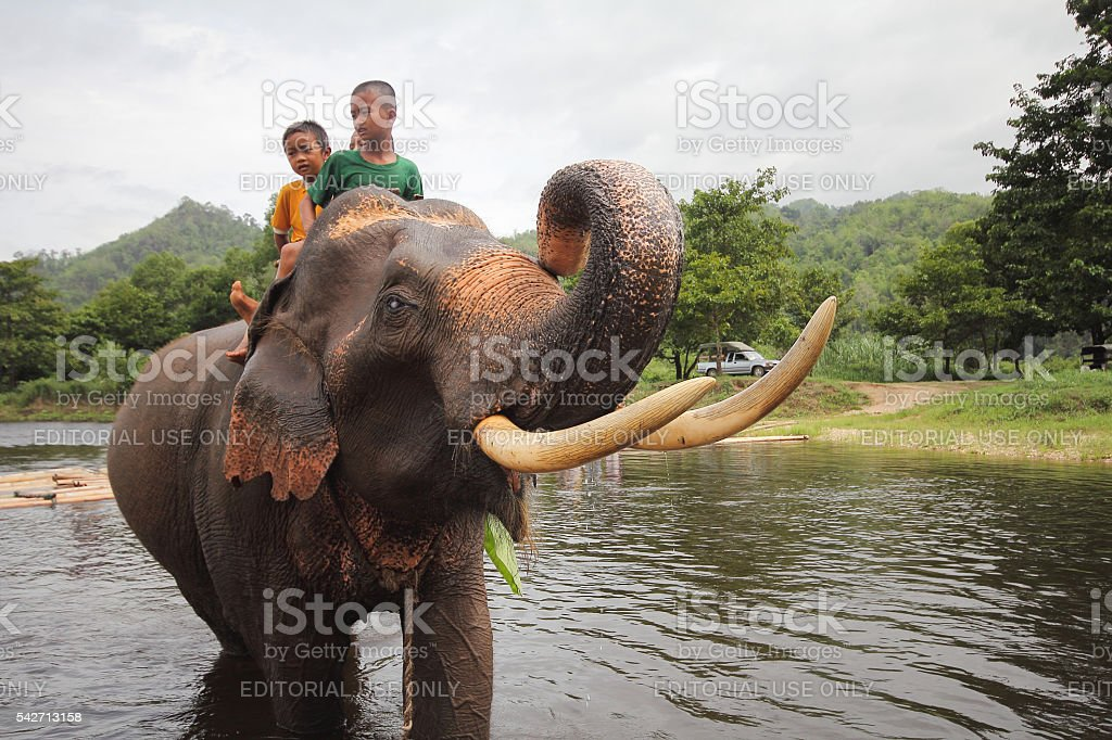 many children riding on elephant stock photo