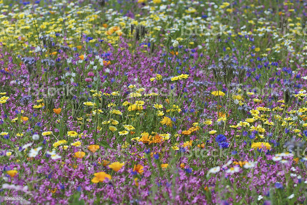 Many colorful wildflowers stock photo