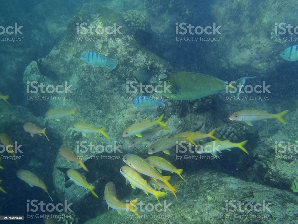 many different fish swim in hanauma bay stock photo
