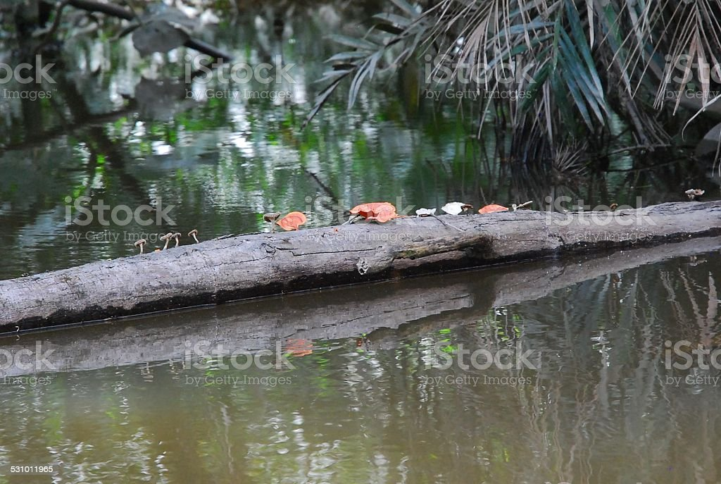 Many Different Mushrooms Growing on Log in the Water royalty-free stock photo