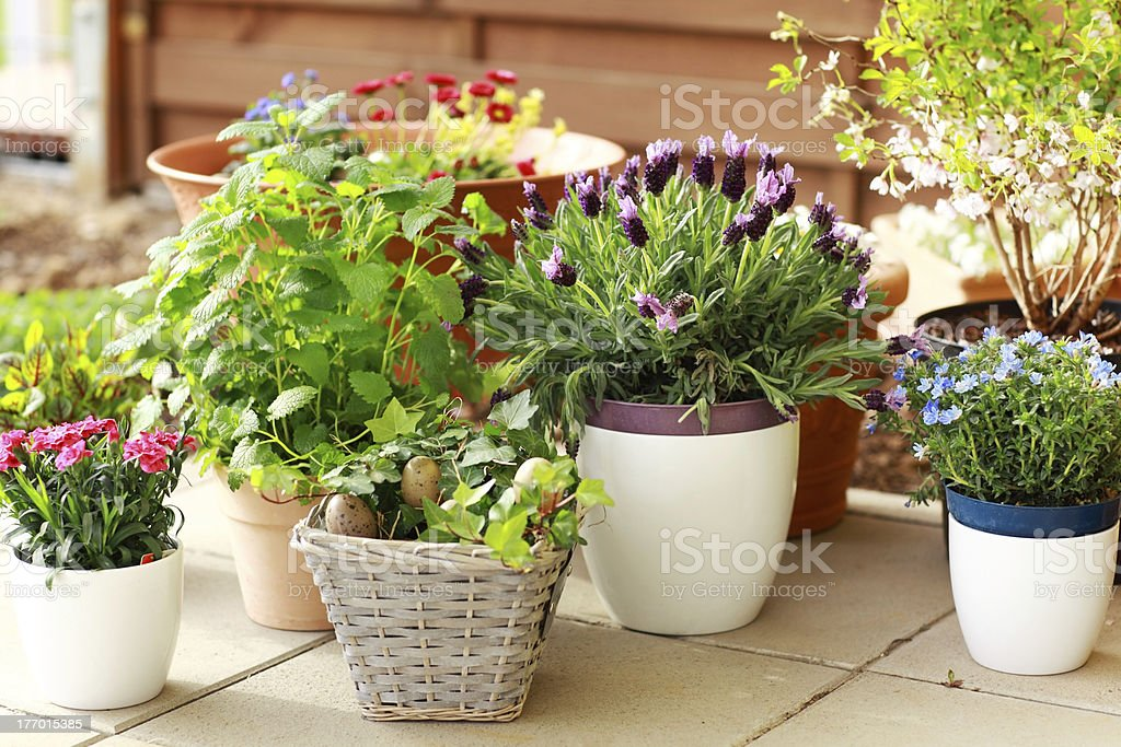 Many different sized flower pots with assortment of flowers stock photo