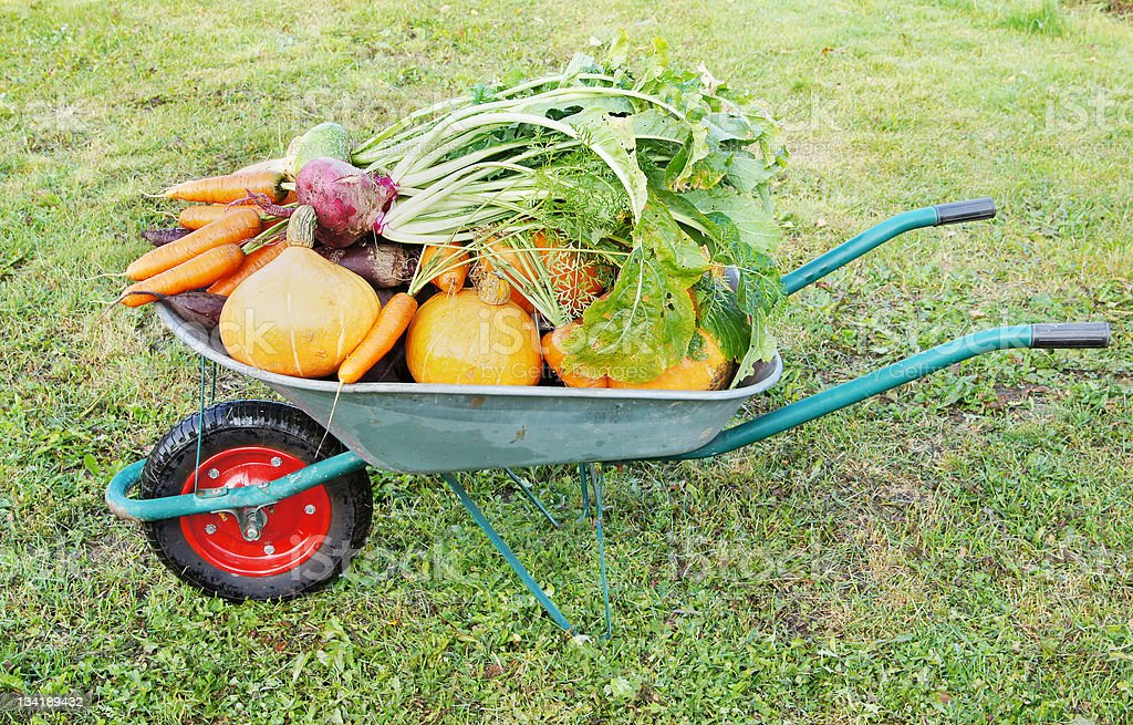 Many different vegetables lie in the garden cart royalty-free stock photo