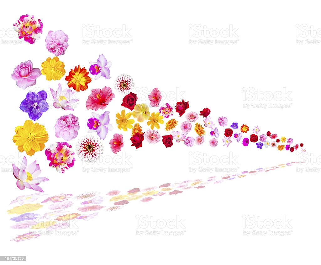 many flower blowing in the wind, with shadow royalty-free stock photo