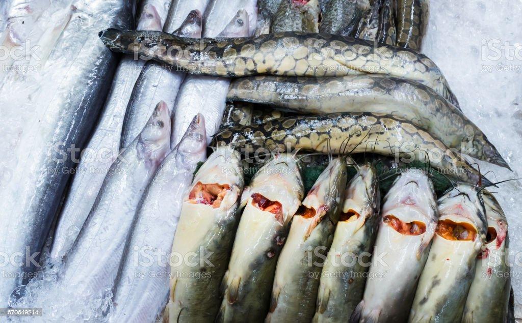 Many freshwater fishes in supermarket stock photo