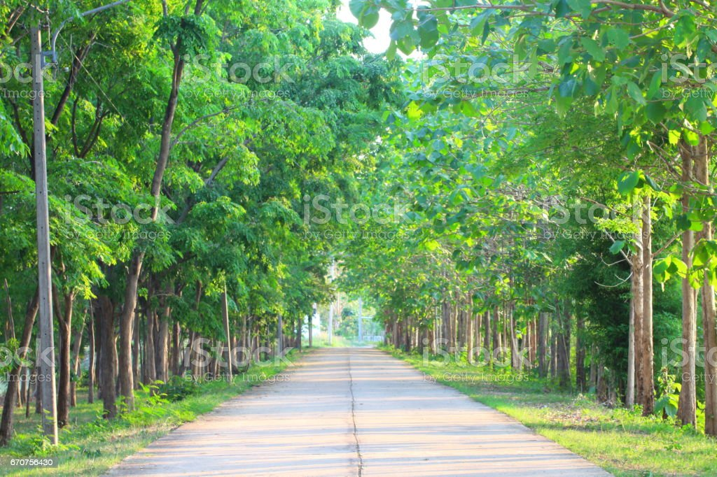 Many green forests are on the side of the road. stock photo