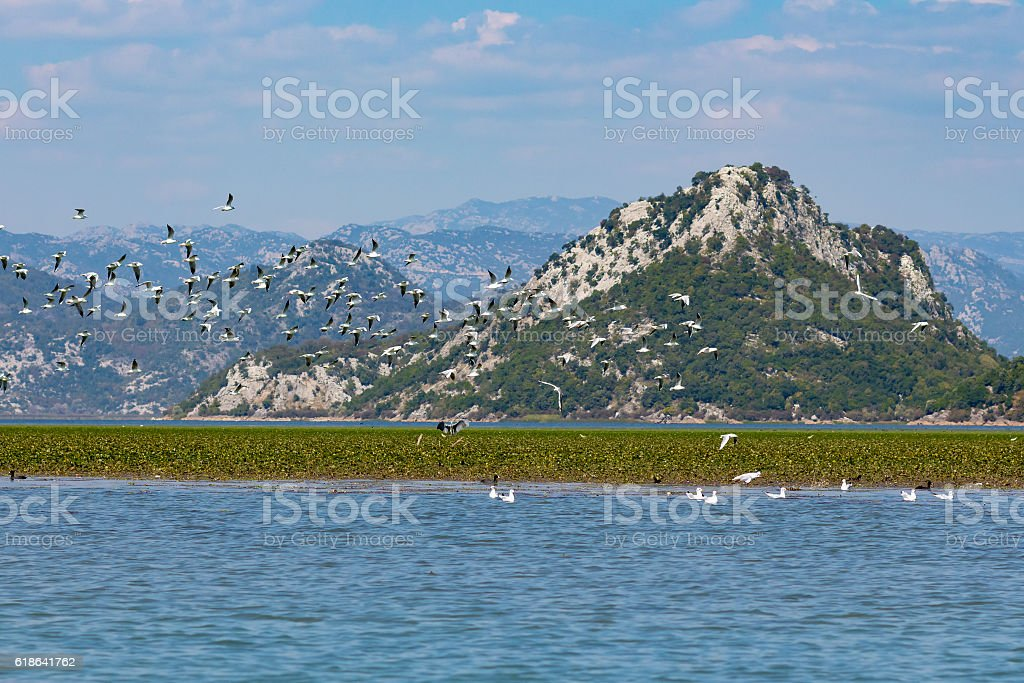 Many gulls flying over the lake on a background of mountains. Skadar...