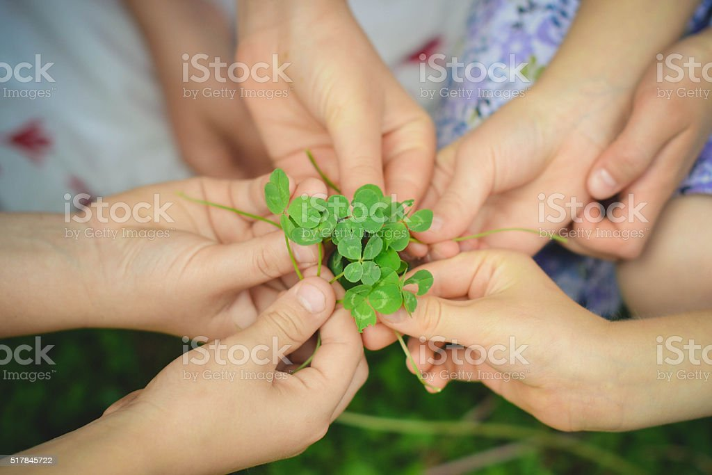 Many hands holding four leaf clovers stock photo