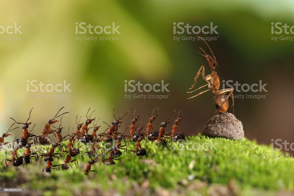 Many insects ants rally in the woods. stock photo