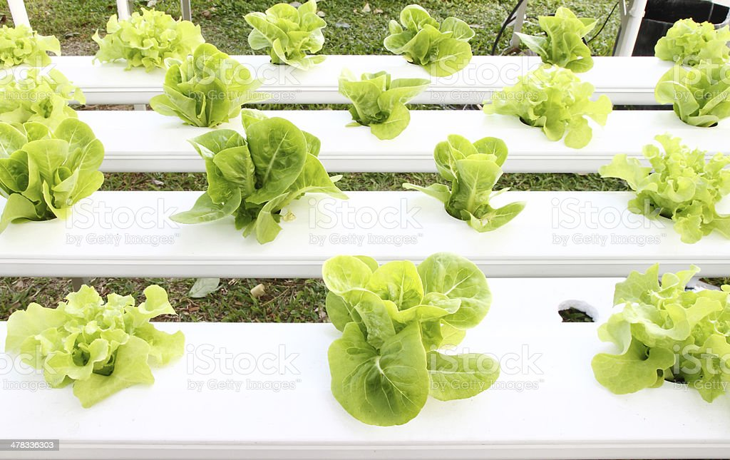 many kinds of hydroponic system stock photo