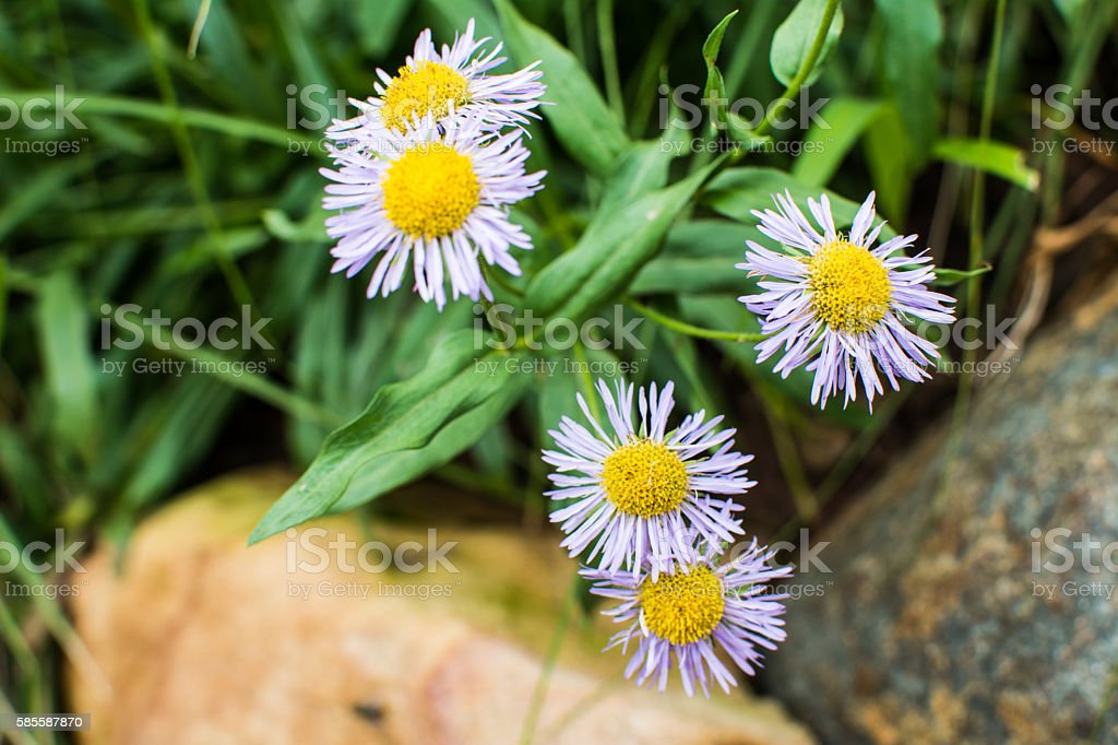 Many little flowers stock photo