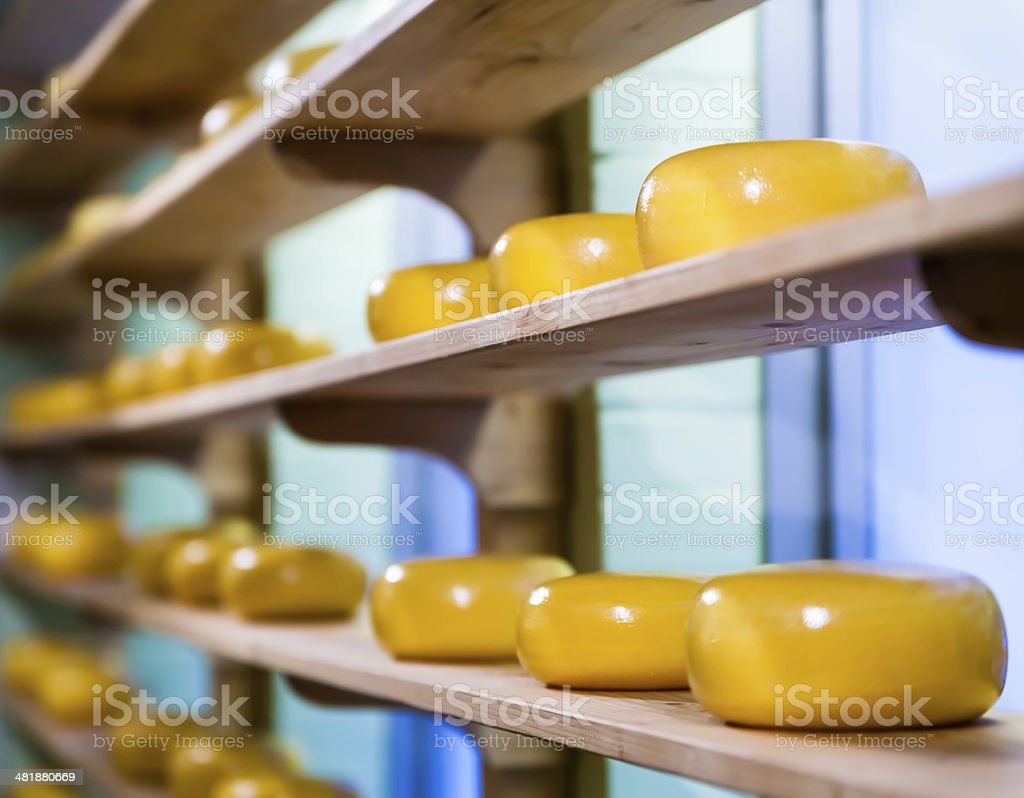 Many matured cheeses.  Dutch cheese on shelves stock photo