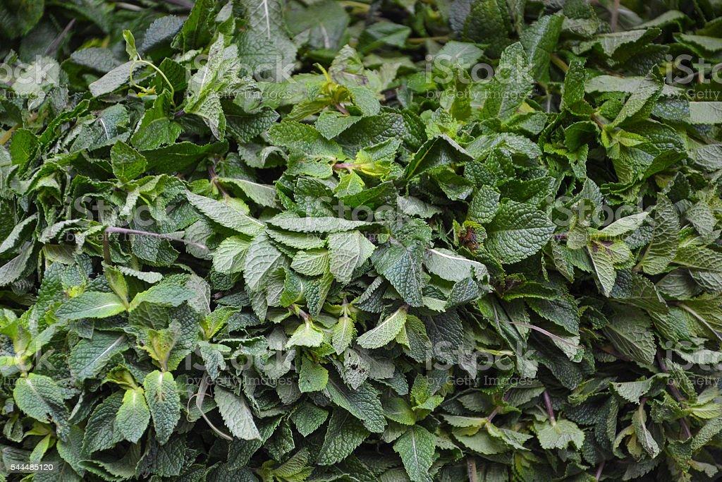 many mit leafs on market stock photo