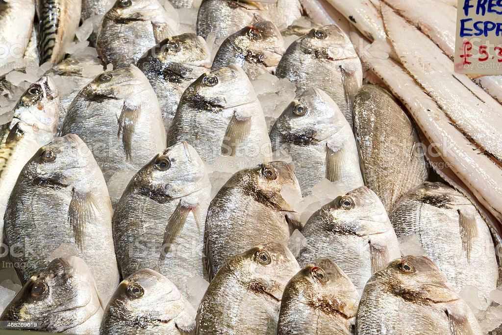 Many pieces of Fresh sea bream on ice royalty-free stock photo