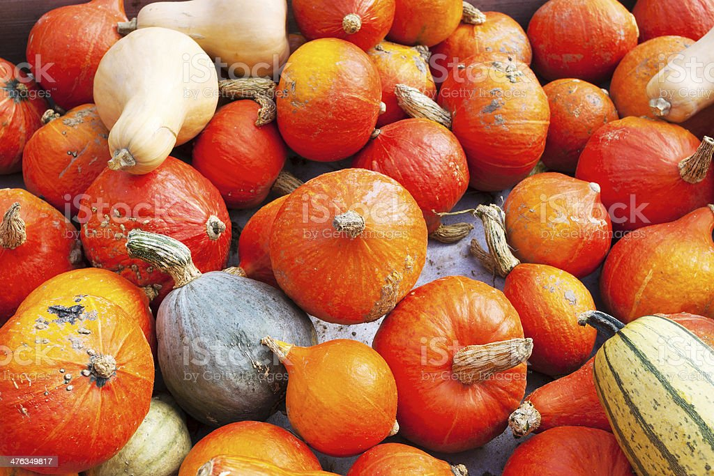 Many pumpkins royalty-free stock photo