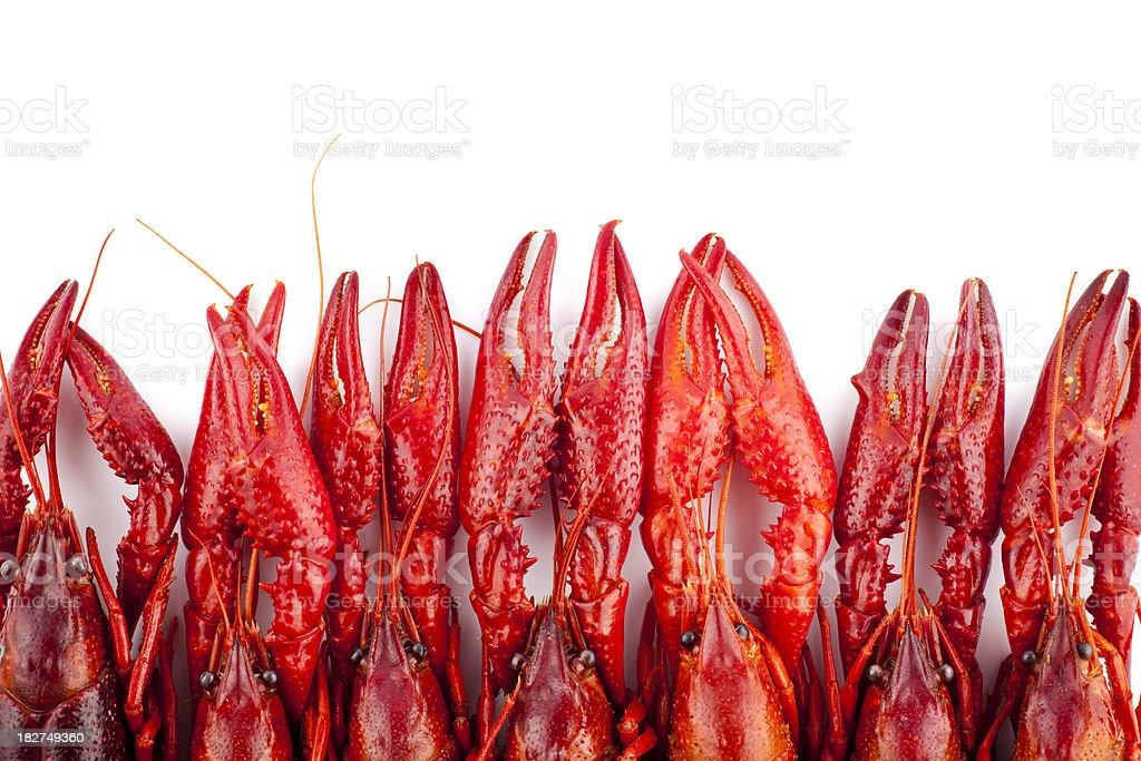 Many red crayfish isolated on white royalty-free stock photo