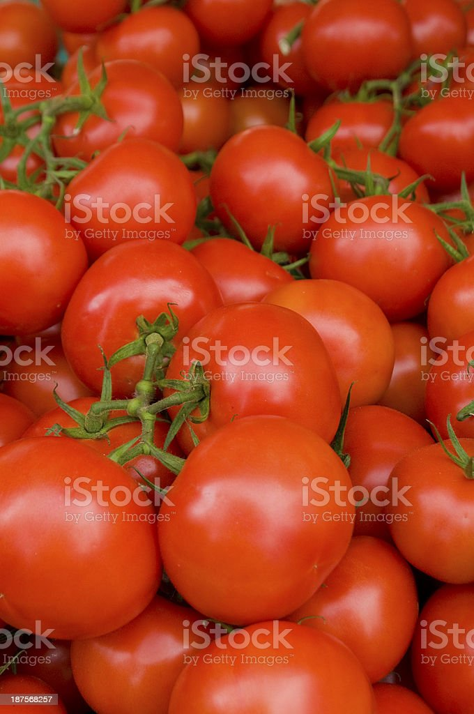 Many red tomatoes stock photo