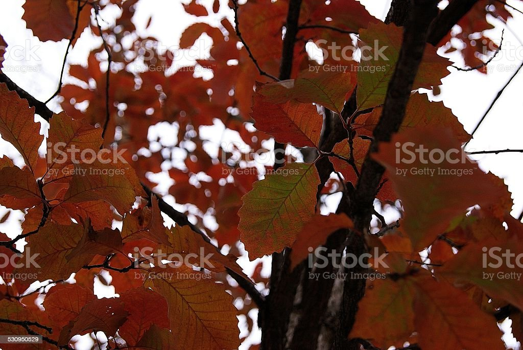 Many Rigged Leaves royalty-free stock photo