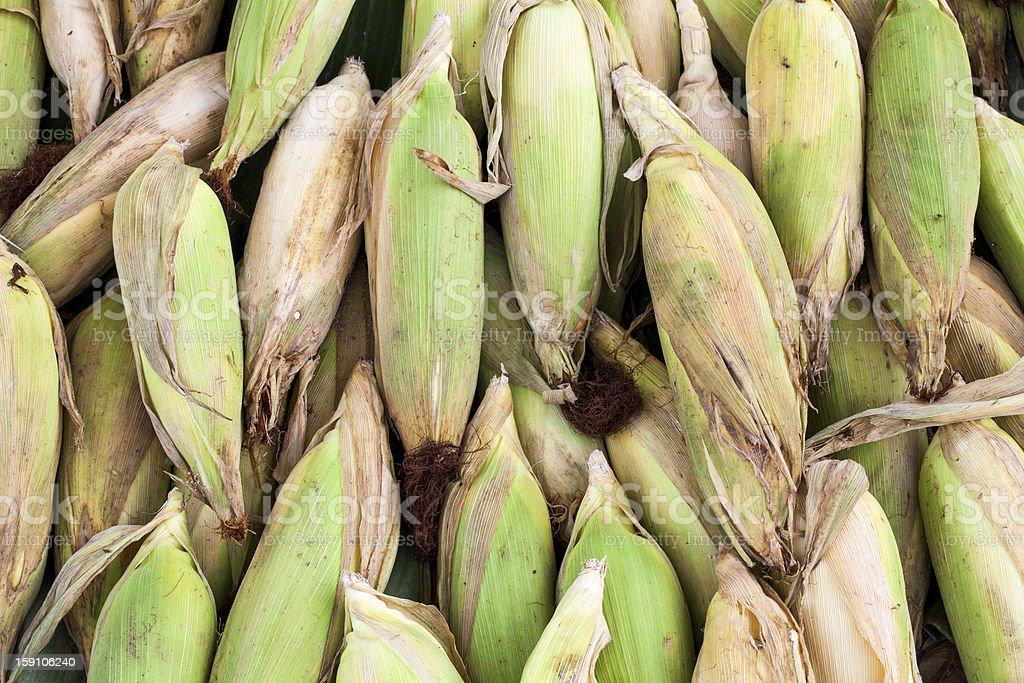 many ripe corns royalty-free stock photo