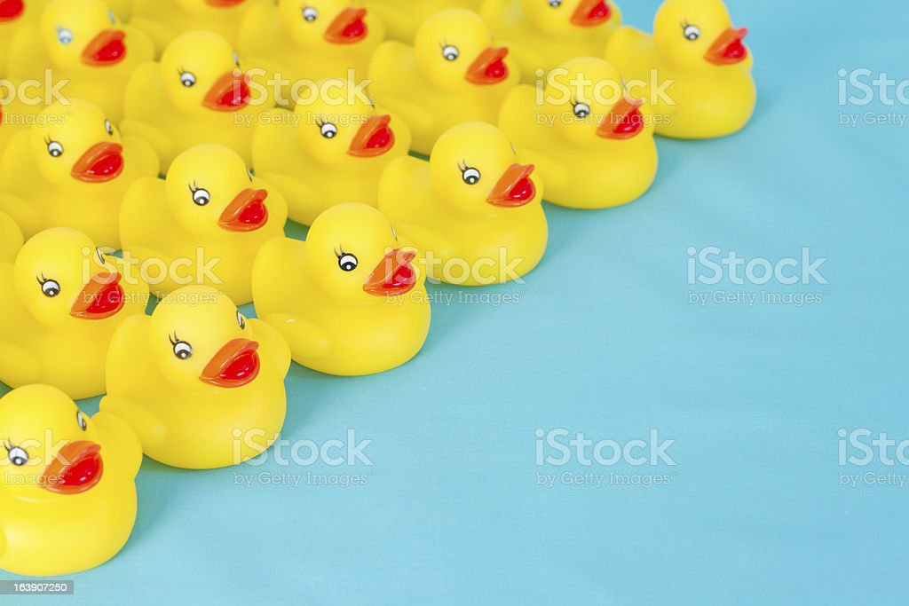 Many rows of yellow rubber ducks on light blue background. stock photo
