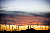 Many Sailboats Against Sunset