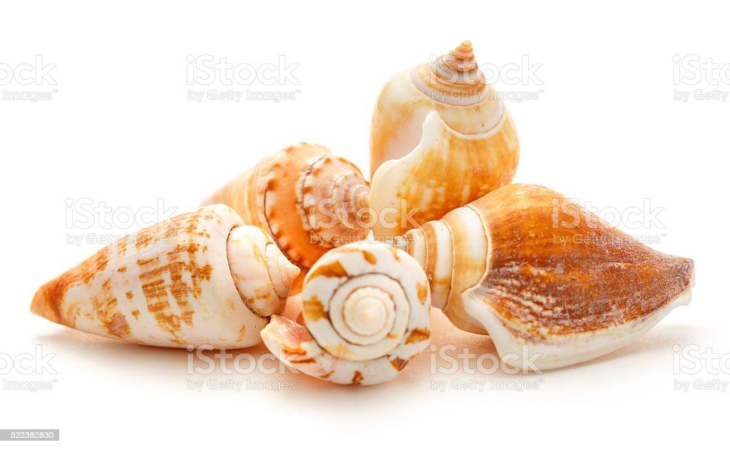 Many seashells on white background stock photo