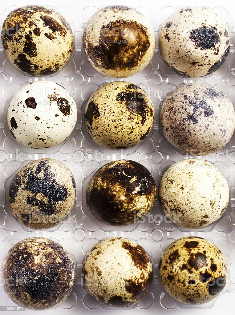 Many small brown spotted quail eggs in a plastic box royalty-free stock photo