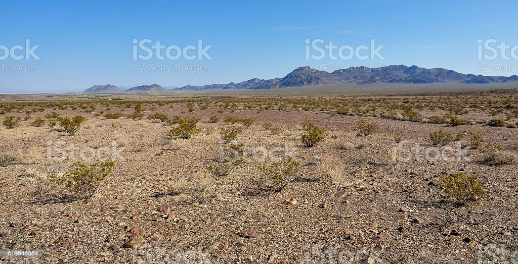 Many small chapparal trees in Death Valley desert stock photo