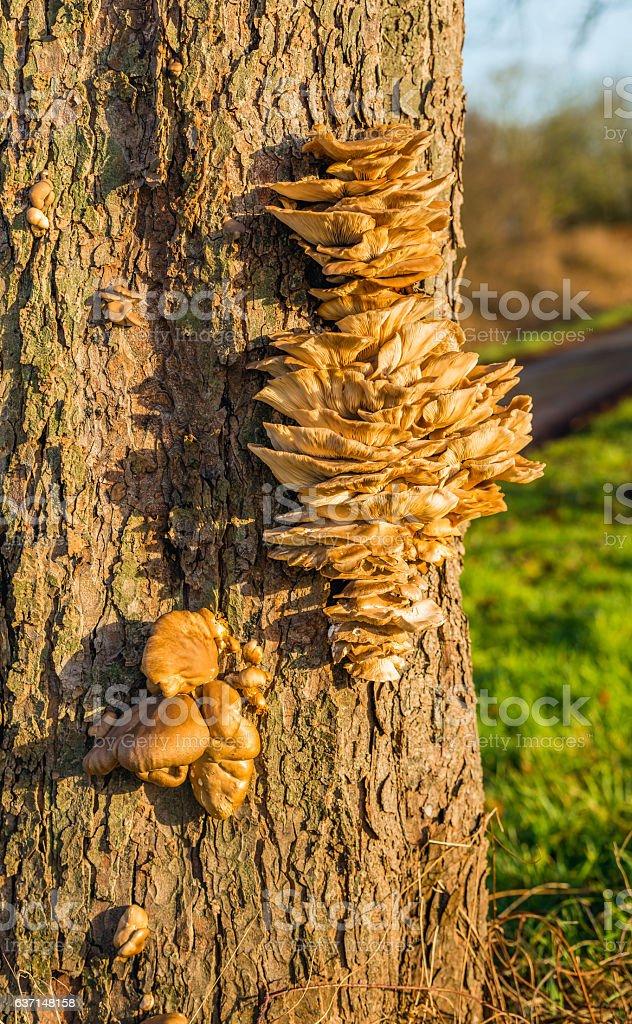 Many small fungi together on the bark of a tree stock photo