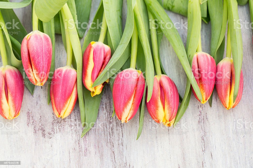 Many Spring Tulip Flowers on White Wood Table stock photo