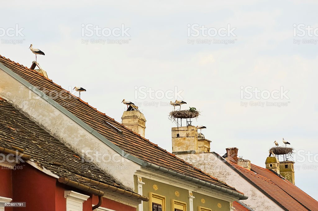 Many storks on the roofs stock photo