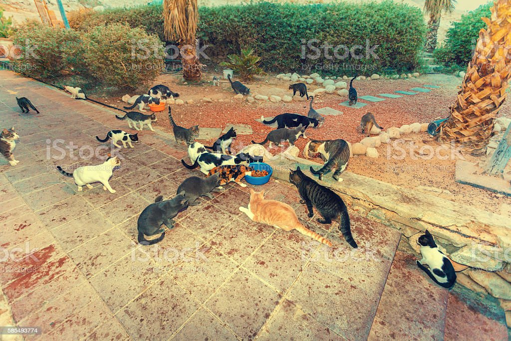 Many stray cats outdoor in park stock photo