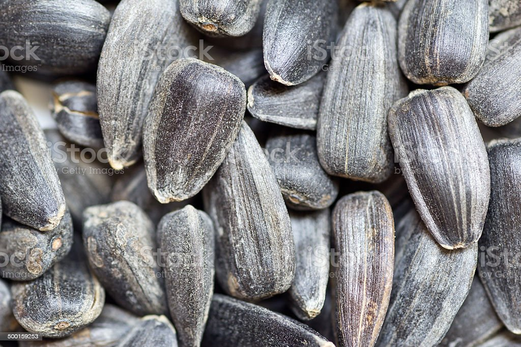 Many sunflower seeds stock photo