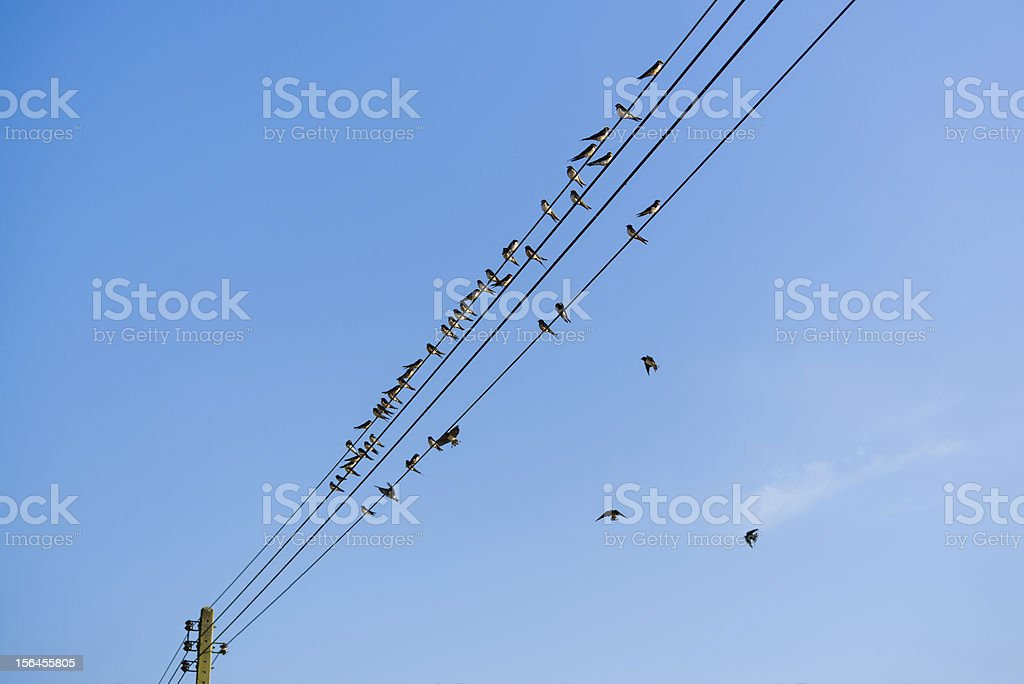 many swallows on a wire royalty-free stock photo