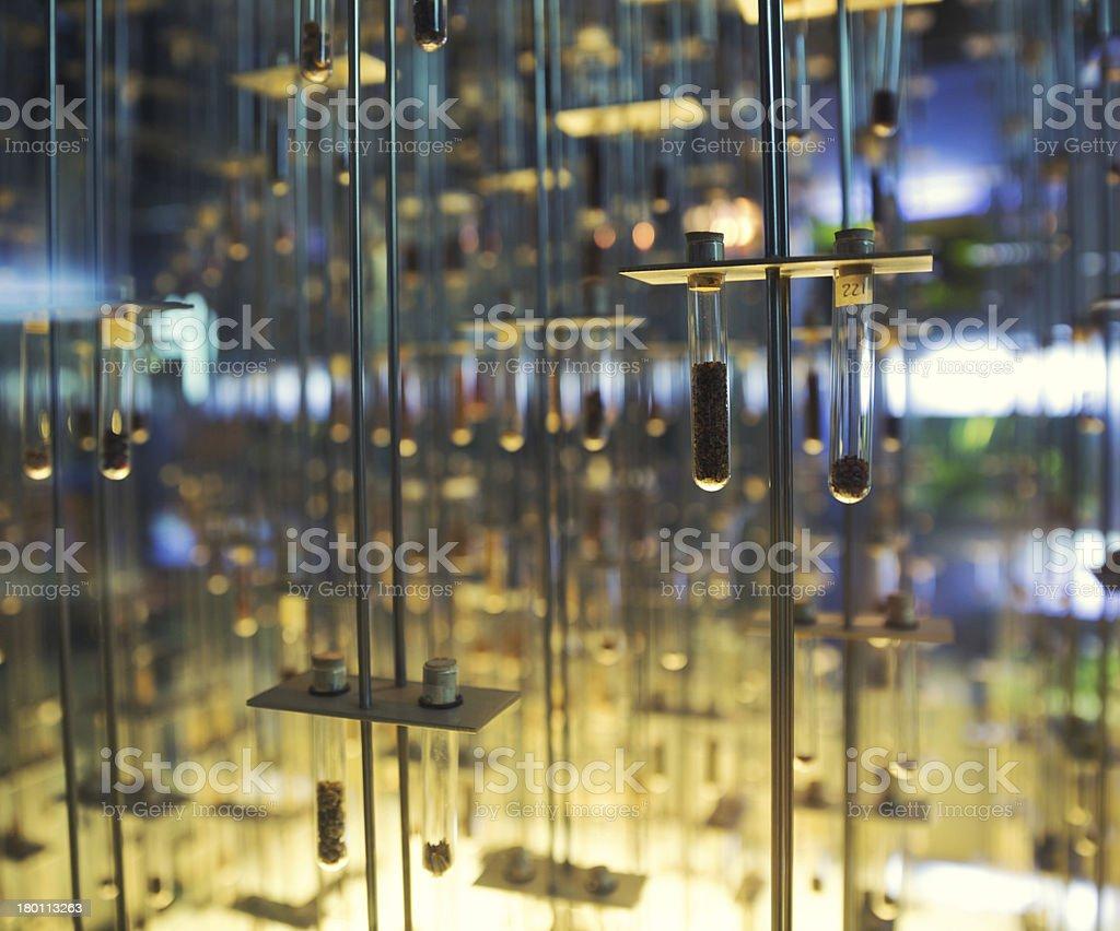 Many test tubes royalty-free stock photo