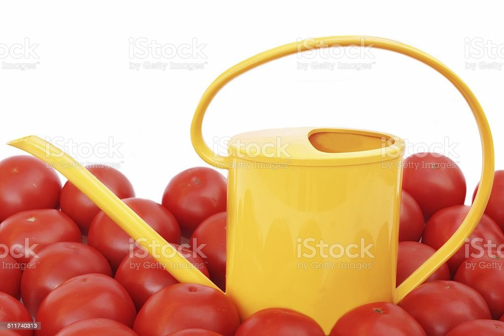 Many tomatoes and watering can stock photo