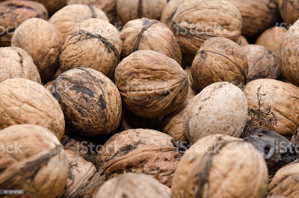 Many walnuts royalty-free stock photo