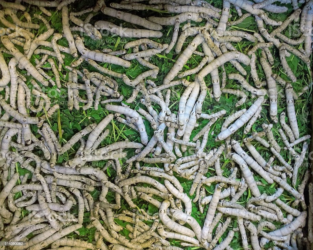 Many Worms from top view stock photo