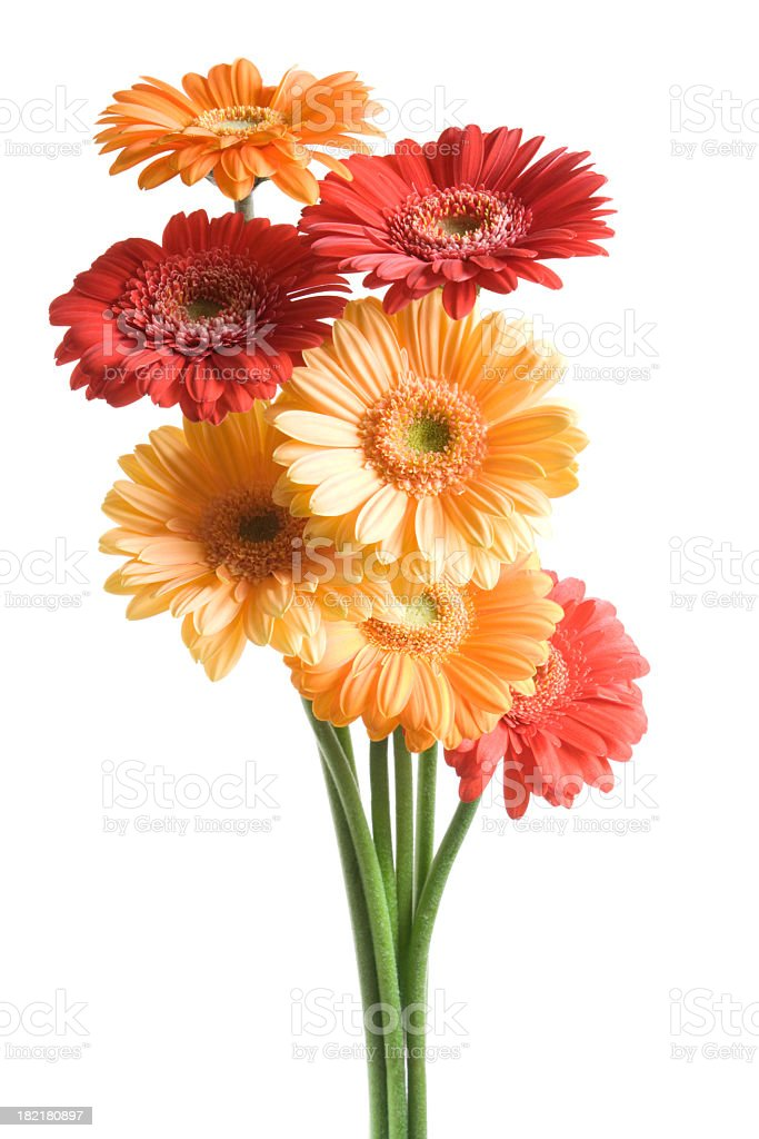 Many-coloured fowers on white background. stock photo