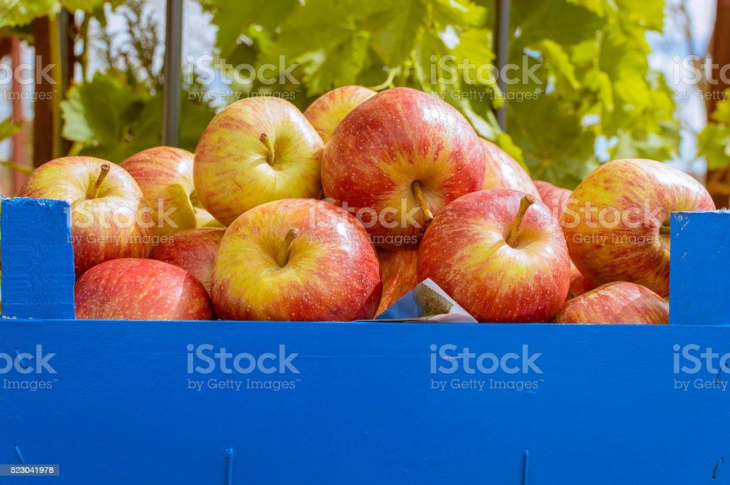 manzanas photo libre de droits