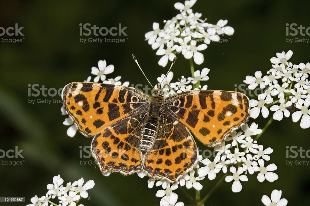Map butterfly royalty-free stock photo