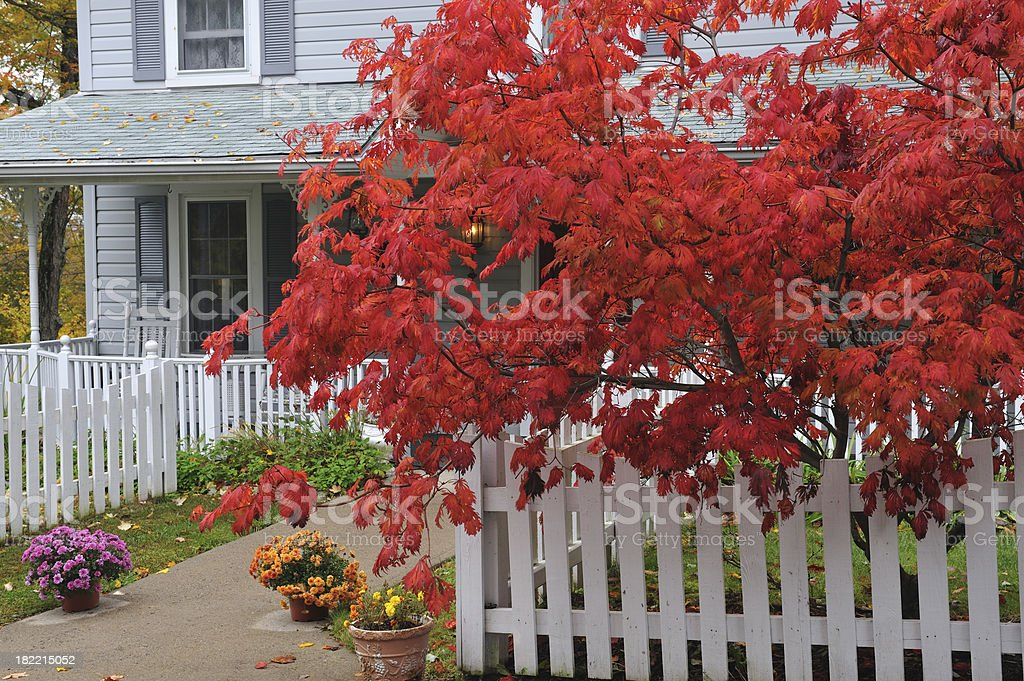 Maple and House royalty-free stock photo