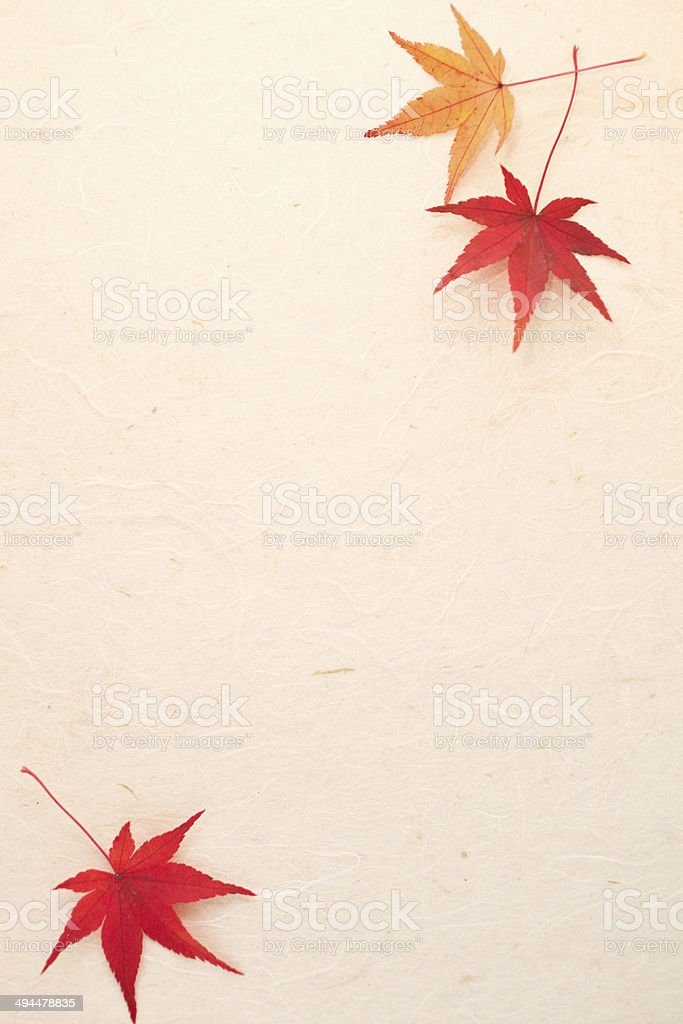 Maple and paper stock photo