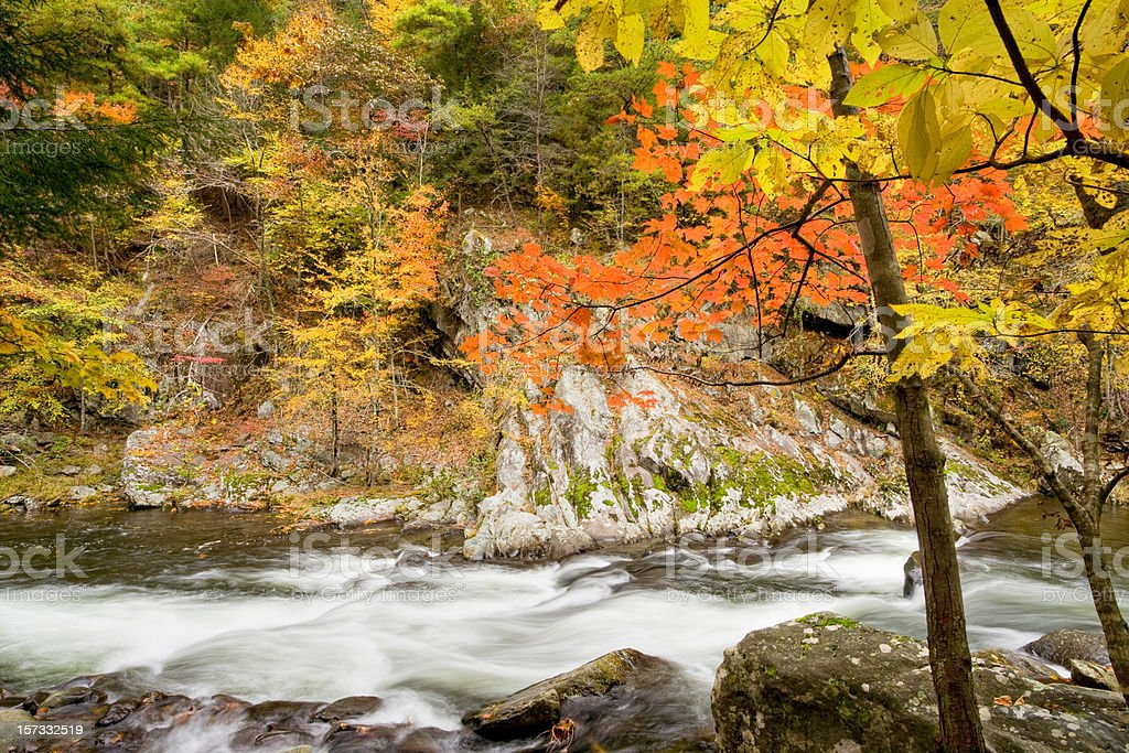 Maple Cascade royalty-free stock photo