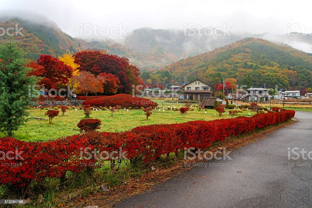 Maple corridor and local house in Kawaguchiko stock photo