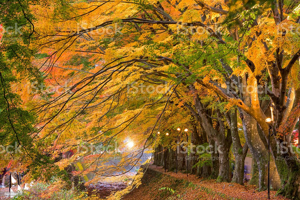 Maple Corridor of Japan stock photo