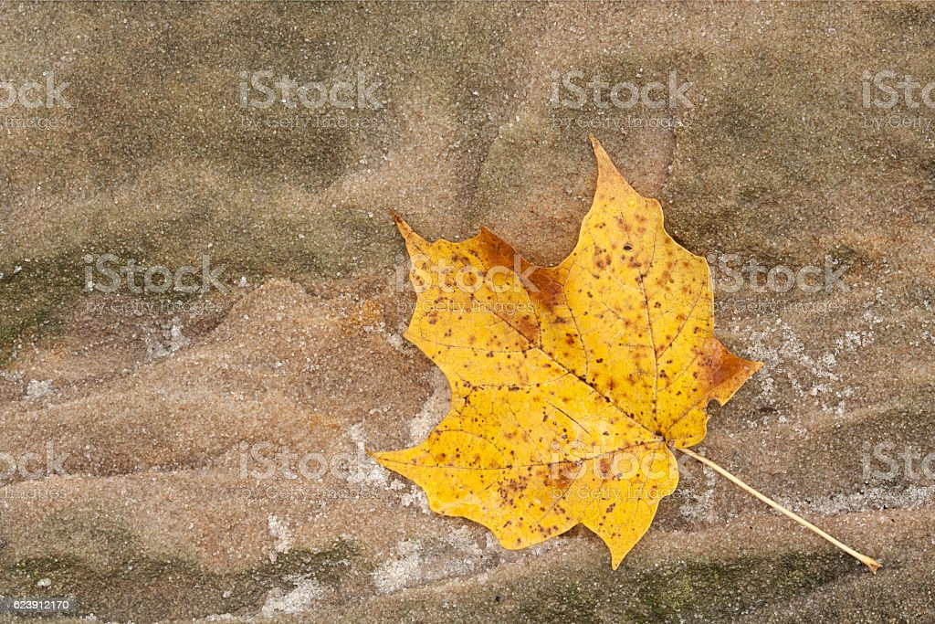 Maple Leaf and Sandstone stock photo