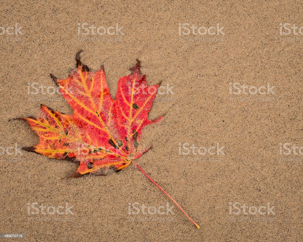 Maple Leaf In The Sand stock photo