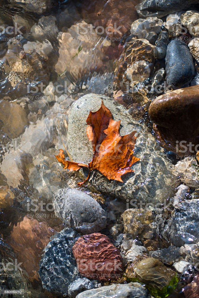 Maple leaf on a rock on the river bank stock photo