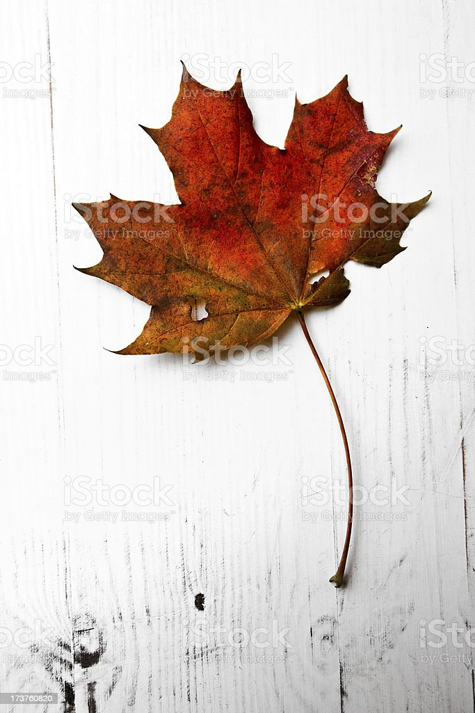Maple leaf on a white wooden background royalty-free stock photo